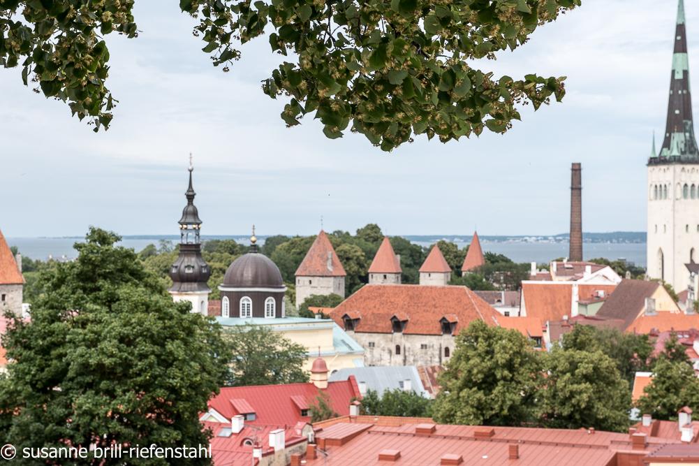 Tallinn (Reval)/ Blick von der Stadtmauer